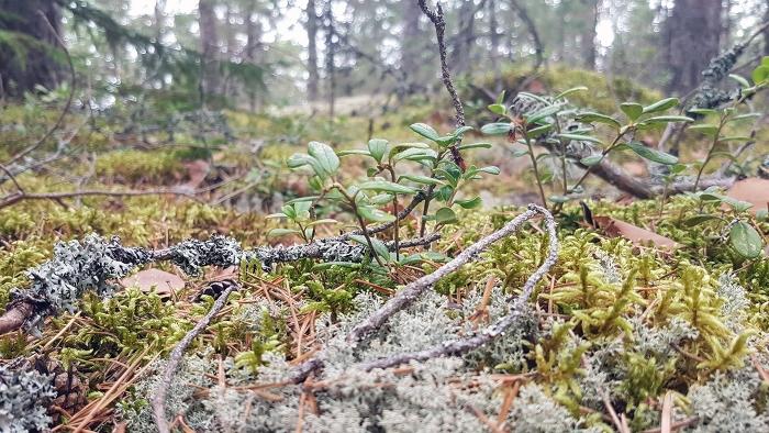 metsässä1