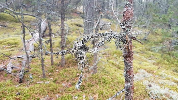 metsässä4